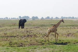 Chobe Elephant and Giraffe